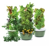 Vertical Gardening without Soil